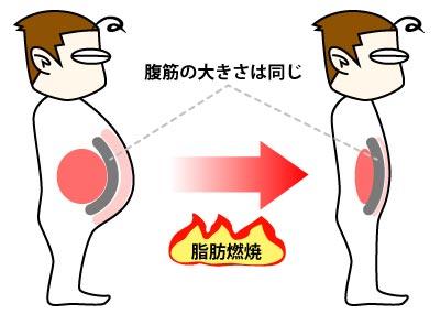 筋肉は、内臓脂肪と皮下脂肪にサンドイッチ