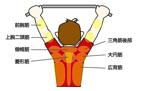 懸垂(チンニング)で鍛えられる筋肉