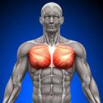 胸筋って意外と難しいwww。鍛え方とバランスで胸板バーン!!【大胸筋内側(中部)編】