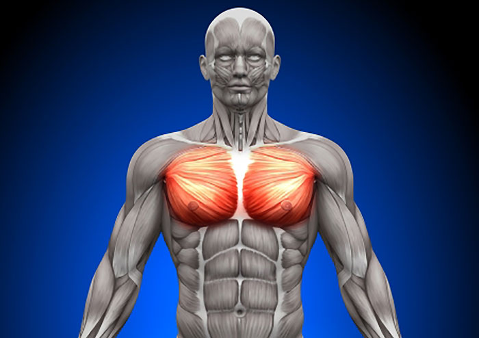 大胸筋を鍛える筋トレ選!鍛え方とバランスで胸板バーン!!【大胸筋内側(中部)編】