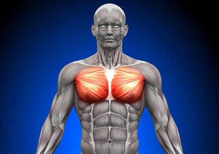 大胸筋の鍛え方!自宅筋トレ法で分厚い胸板をつくる!