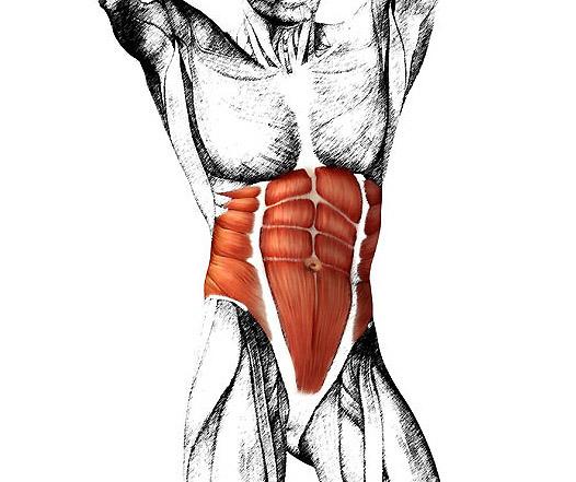 腹筋ローラー効果で痩せる? 腹筋はすでに割れている! 腹筋の筋肉量は結構少ない。