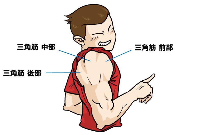 肩の筋トレ、肩の筋肉構造:マンガイラストで筋トレ解説