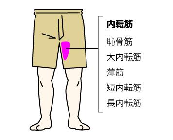 スクワットで鍛えられる筋肉の部位