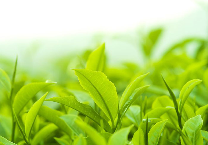 い草のような草っぽい香りが好みを分ける部分かな?