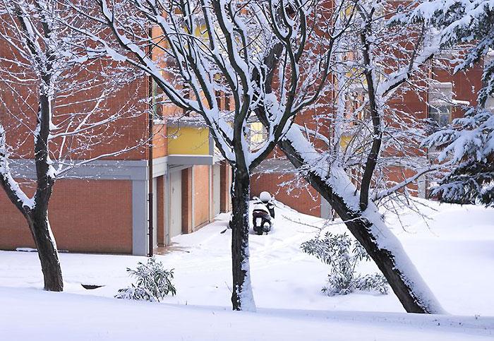 雪国でのフューエルワンの意外な使い方