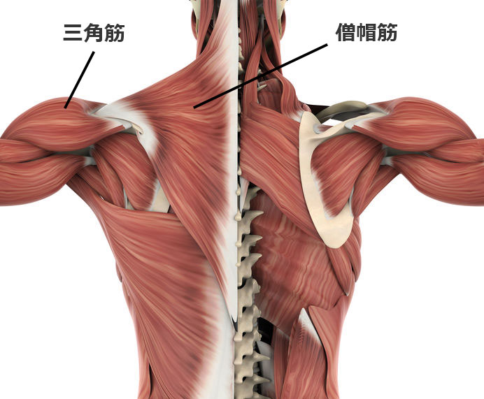 アップライトロウ(アップライトローイング)で鍛えられる筋肉と効果