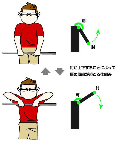 アップライトロウの引き上げるポイントは肘