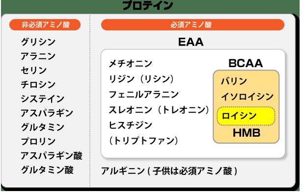 BCAAの筋トレ効果とは?