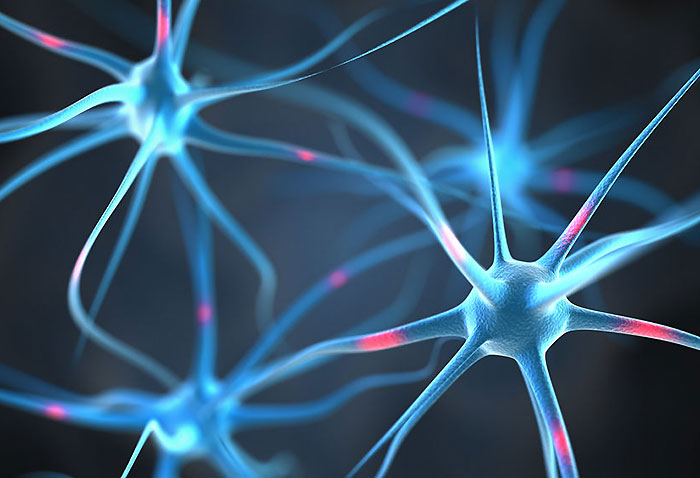 脳内物質についてはまだ分かってないことも・・・