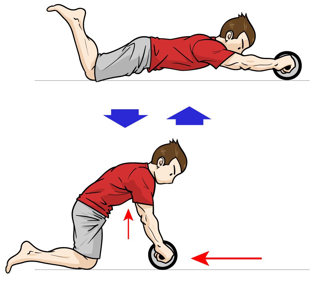 「腹筋ローラー」で下腹部を鍛える!:マンガイラストで筋トレ解説
