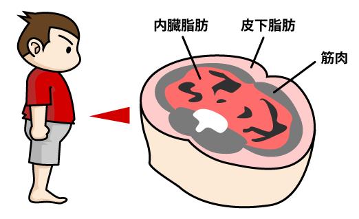 内臓脂肪型と皮下脂肪型のおなかの贅肉:マンガイラストで筋トレ解説