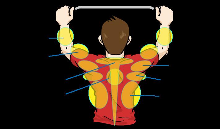 懸垂(チンニング)で鍛えられる筋肉:筋トレをマンガイラスト解説