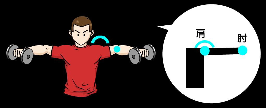 サイドレイズ、三角筋の筋肉の肘:マンガイラストで筋トレ解説
